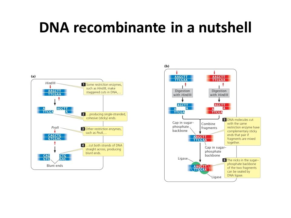 DNA recombinante in a nutshell