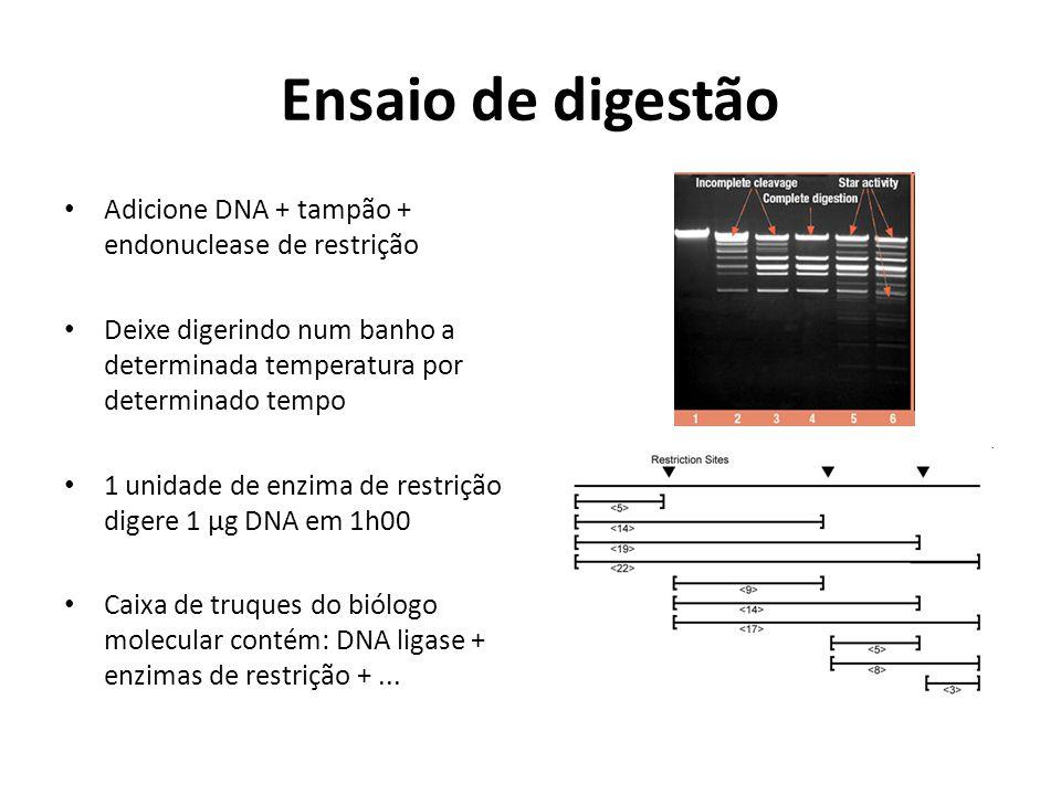 Ensaio de digestão Adicione DNA + tampão + endonuclease de restrição
