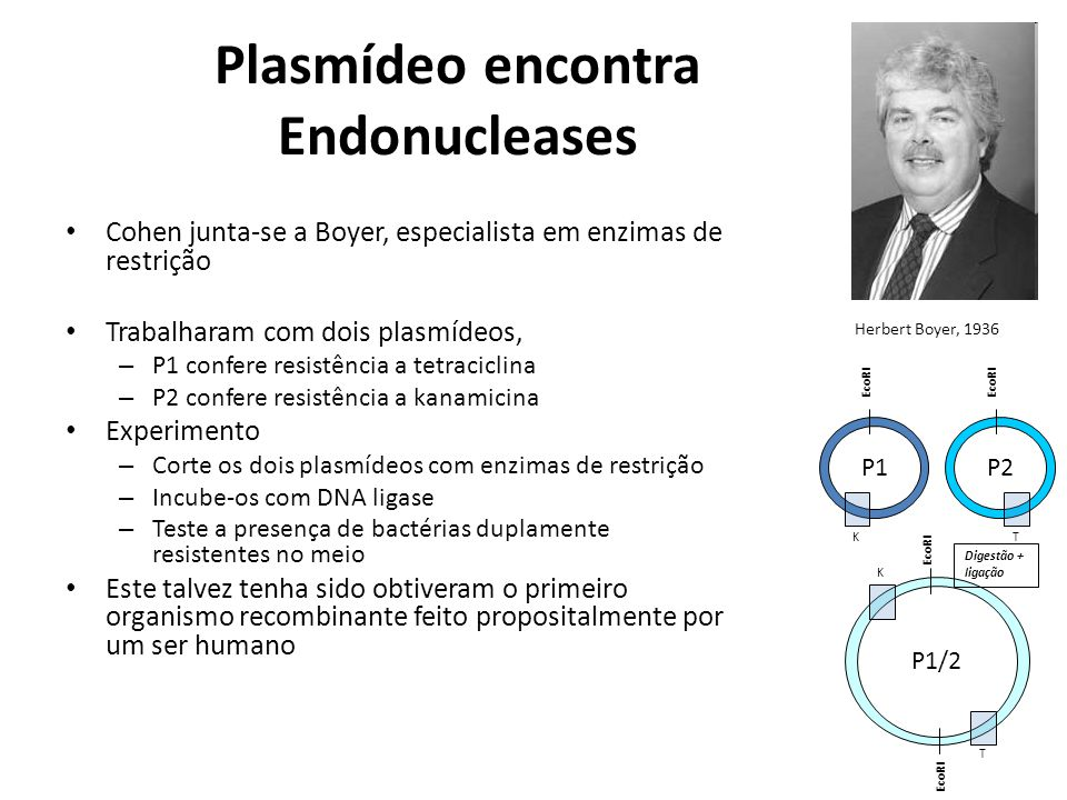 Plasmídeo encontra Endonucleases