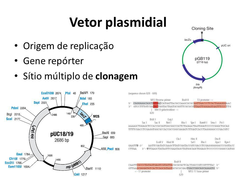 Vetor plasmidial Origem de replicação Gene repórter