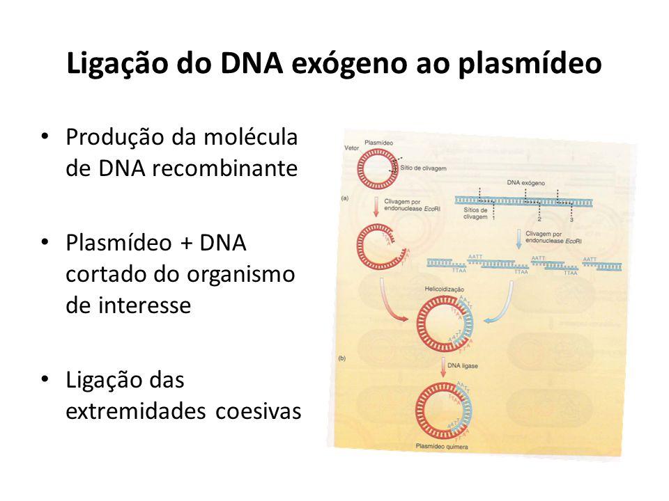 Ligação do DNA exógeno ao plasmídeo