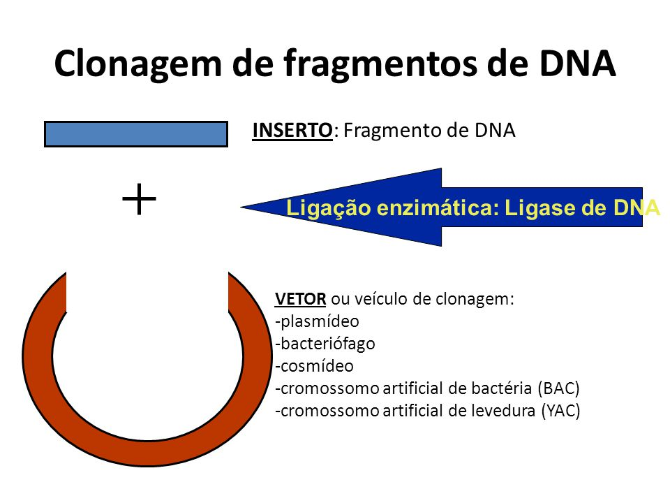 Clonagem de fragmentos de DNA