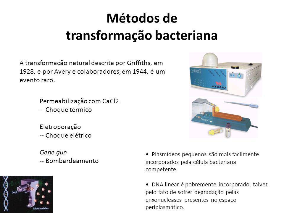Métodos de transformação bacteriana