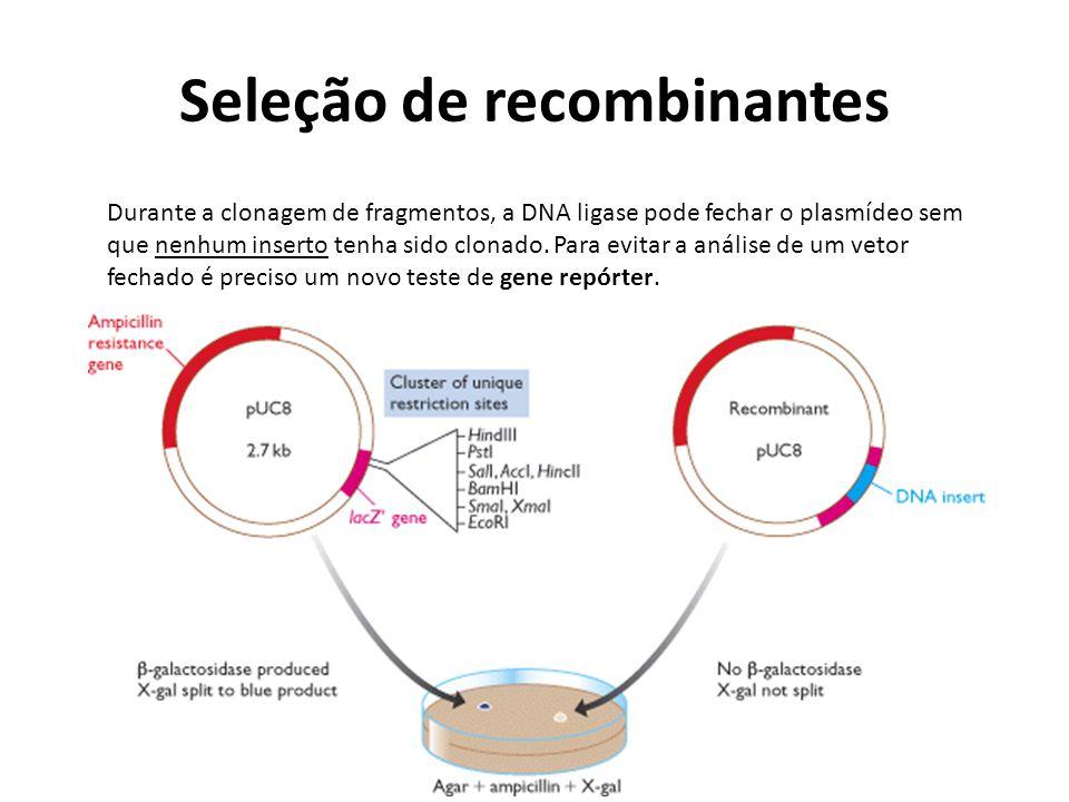 Seleção de recombinantes