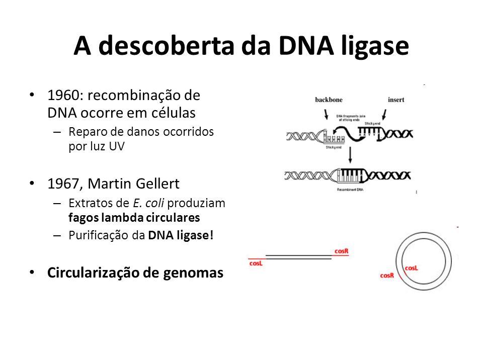 A descoberta da DNA ligase