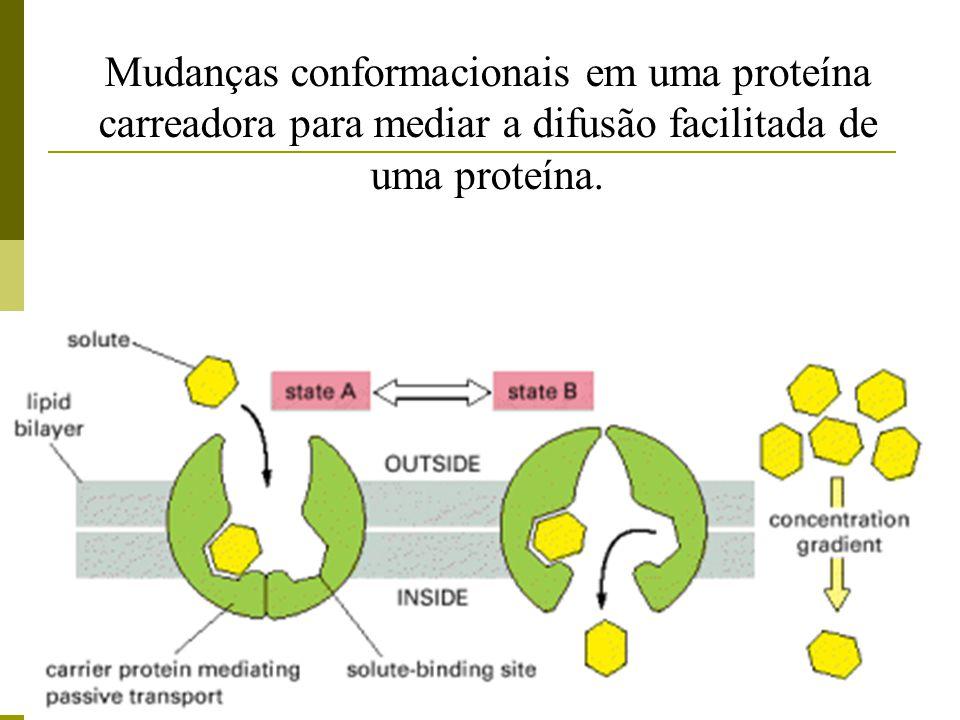 Mudanças conformacionais em uma proteína carreadora para mediar a difusão facilitada de uma proteína.