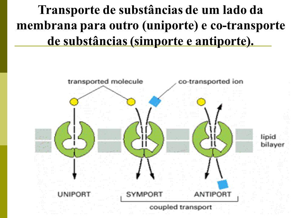 Transporte de substâncias de um lado da membrana para outro (uniporte) e co-transporte de substâncias (simporte e antiporte).