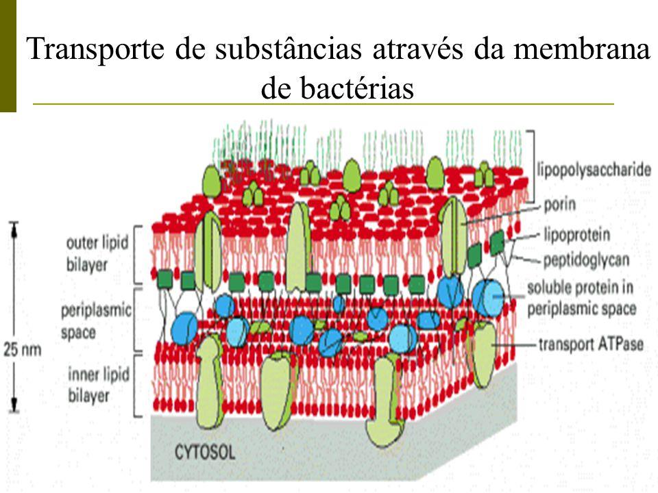 Transporte de substâncias através da membrana de bactérias