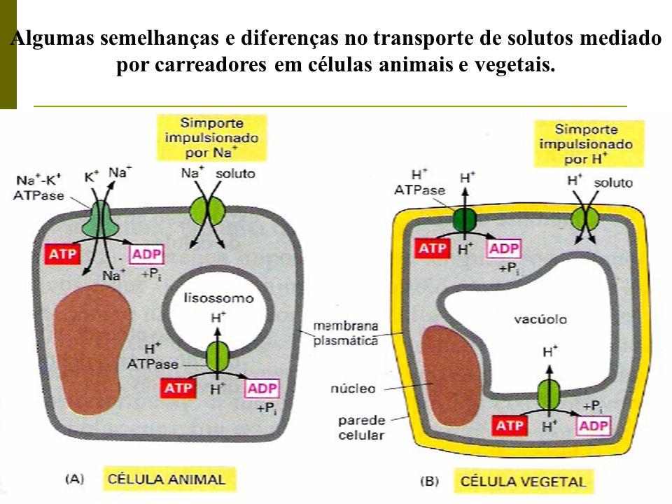 Algumas semelhanças e diferenças no transporte de solutos mediado por carreadores em células animais e vegetais.