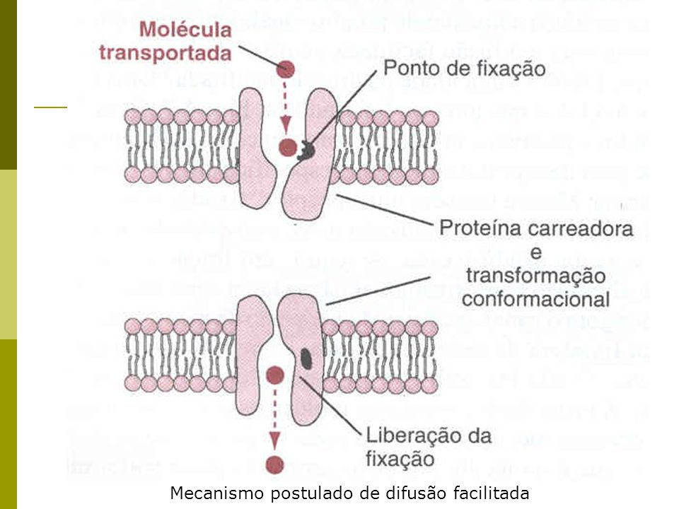 Mecanismo postulado de difusão facilitada