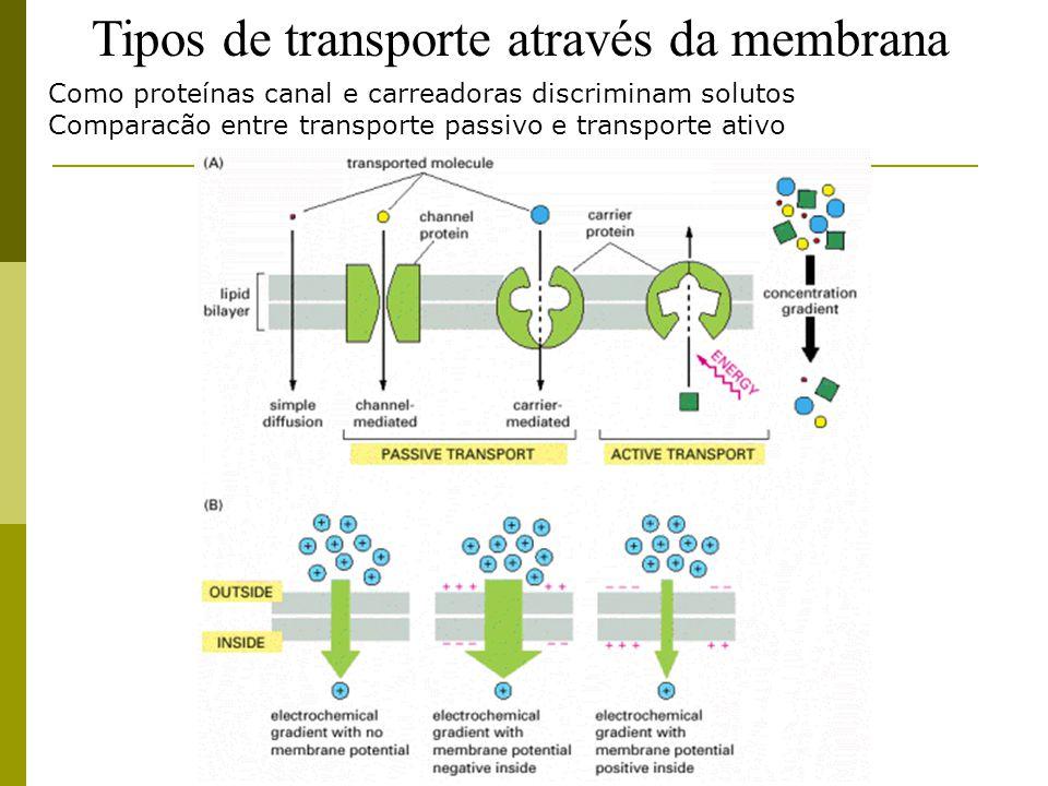 Tipos de transporte através da membrana
