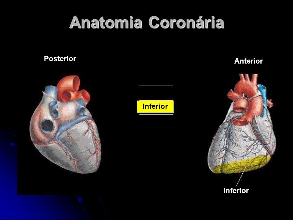 Anatomia Coronária Posterior Anterior Inferior Inferior