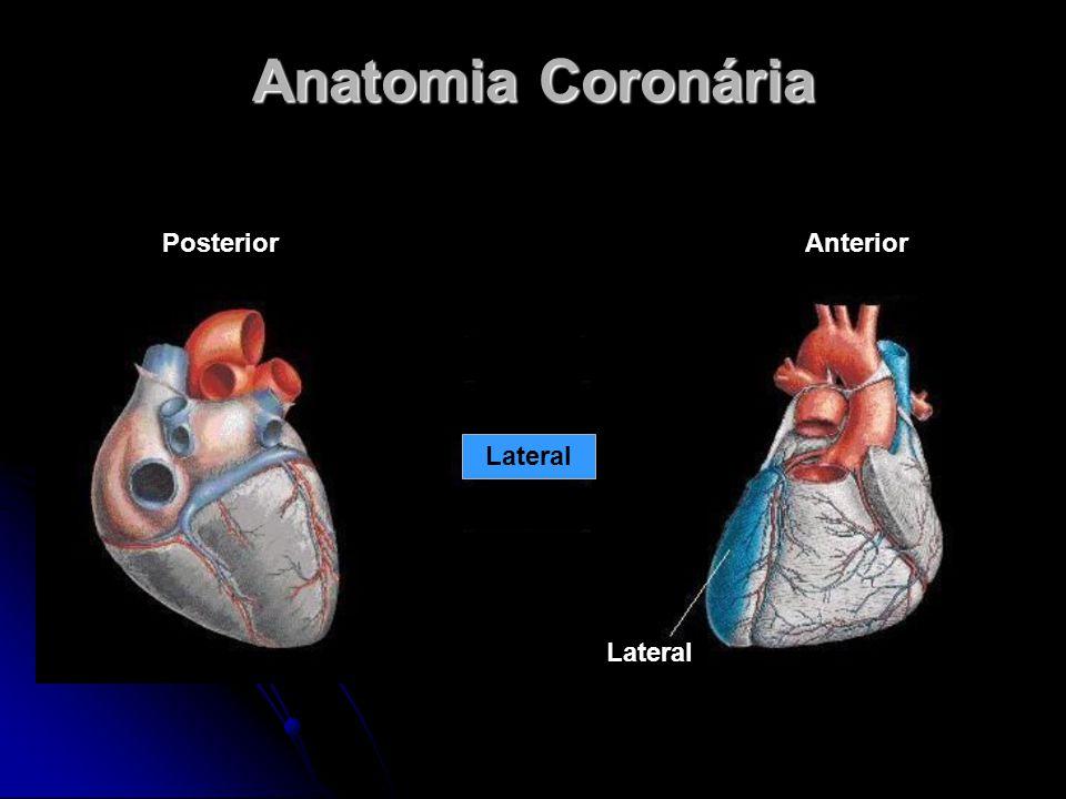 Anatomia Coronária Posterior Anterior Lateral Lateral