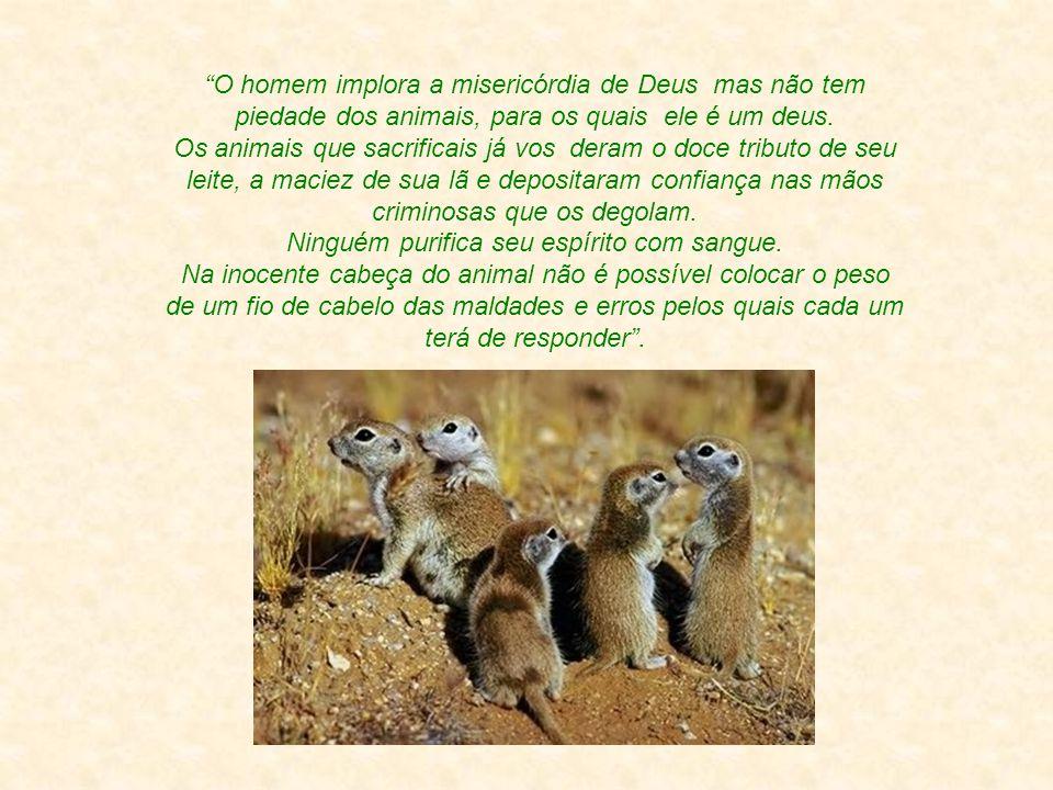 O homem implora a misericórdia de Deus mas não tem piedade dos animais, para os quais ele é um deus.