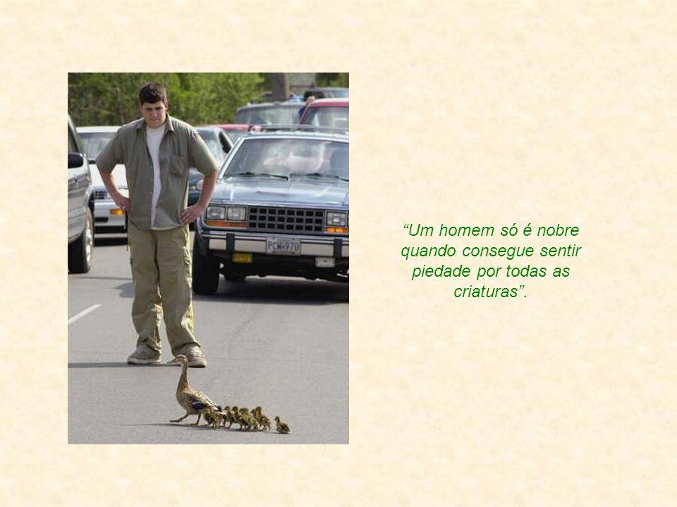 Um homem só é nobre quando consegue sentir piedade por todas as criaturas .