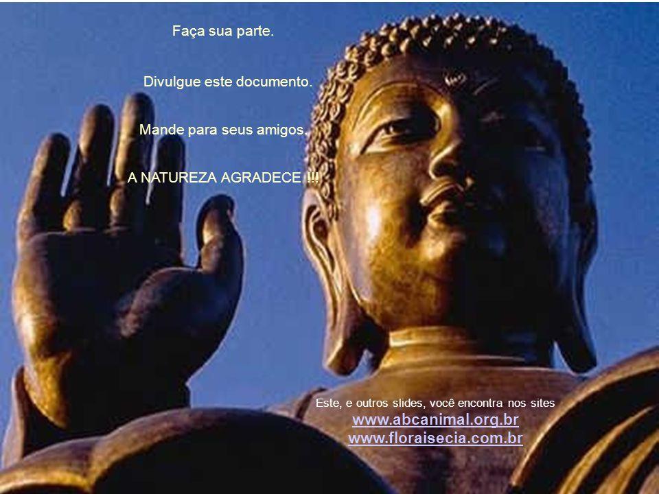 www.abcanimal.org.br www.floraisecia.com.br