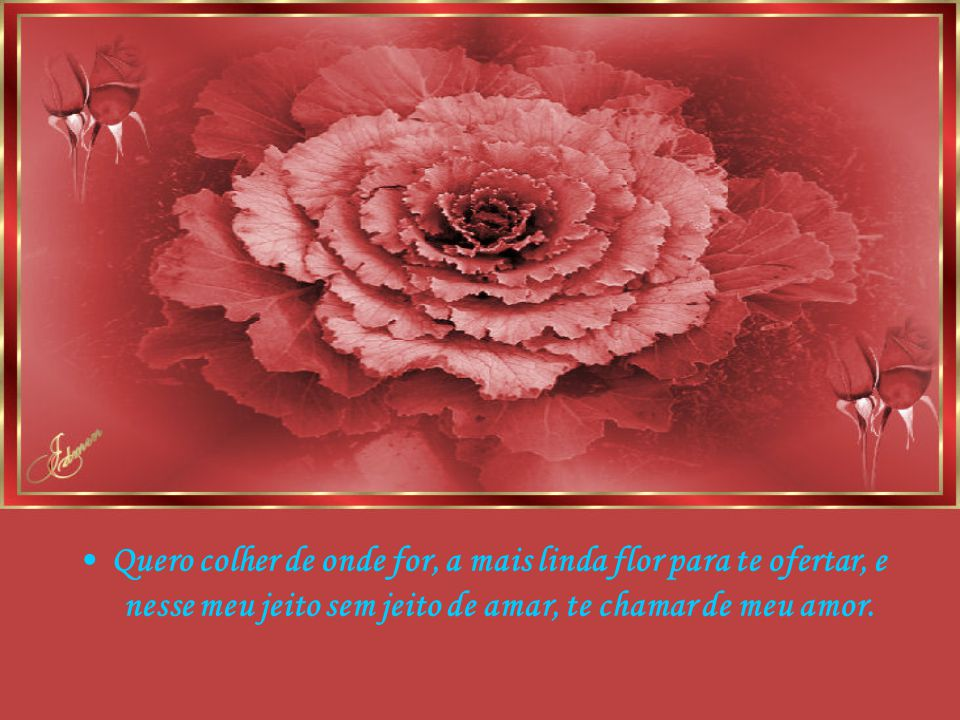 Quero colher de onde for, a mais linda flor para te ofertar, e nesse meu jeito sem jeito de amar, te chamar de meu amor.