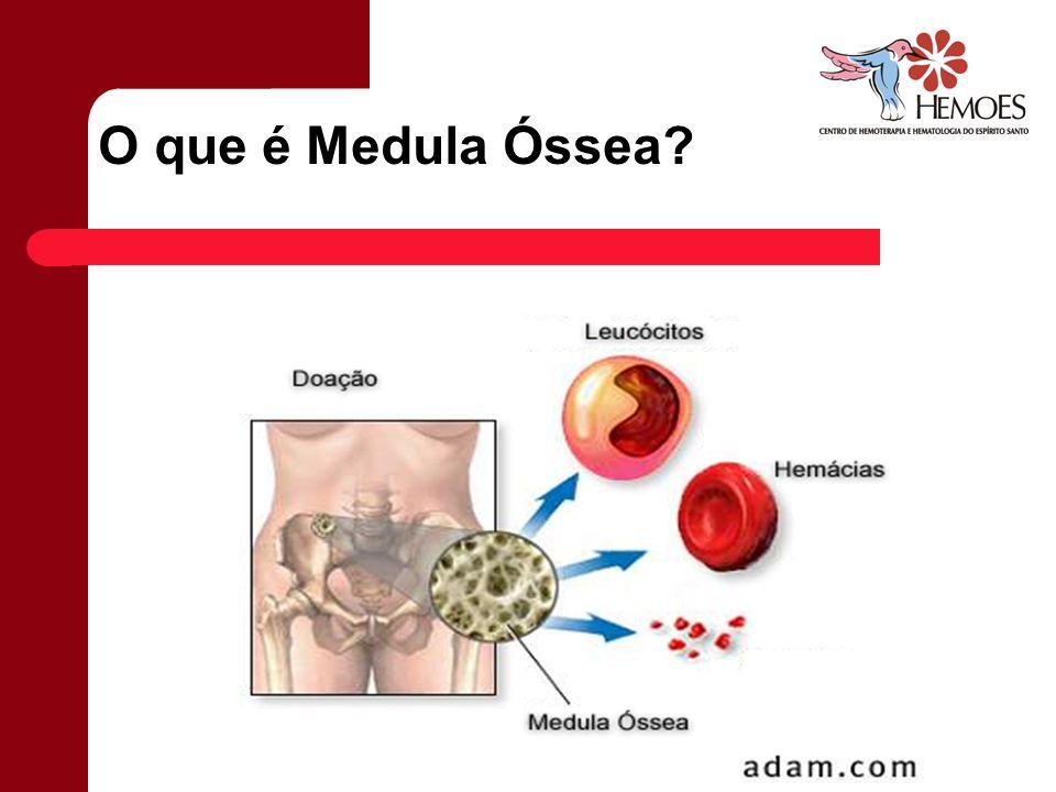O que é Medula Óssea
