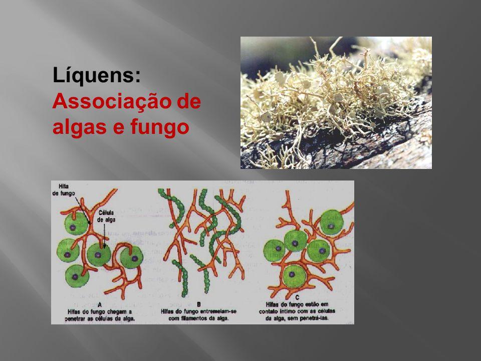 Líquens: Associação de algas e fungo