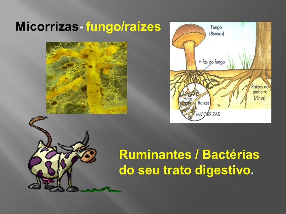 Micorrizas- fungo/raízes
