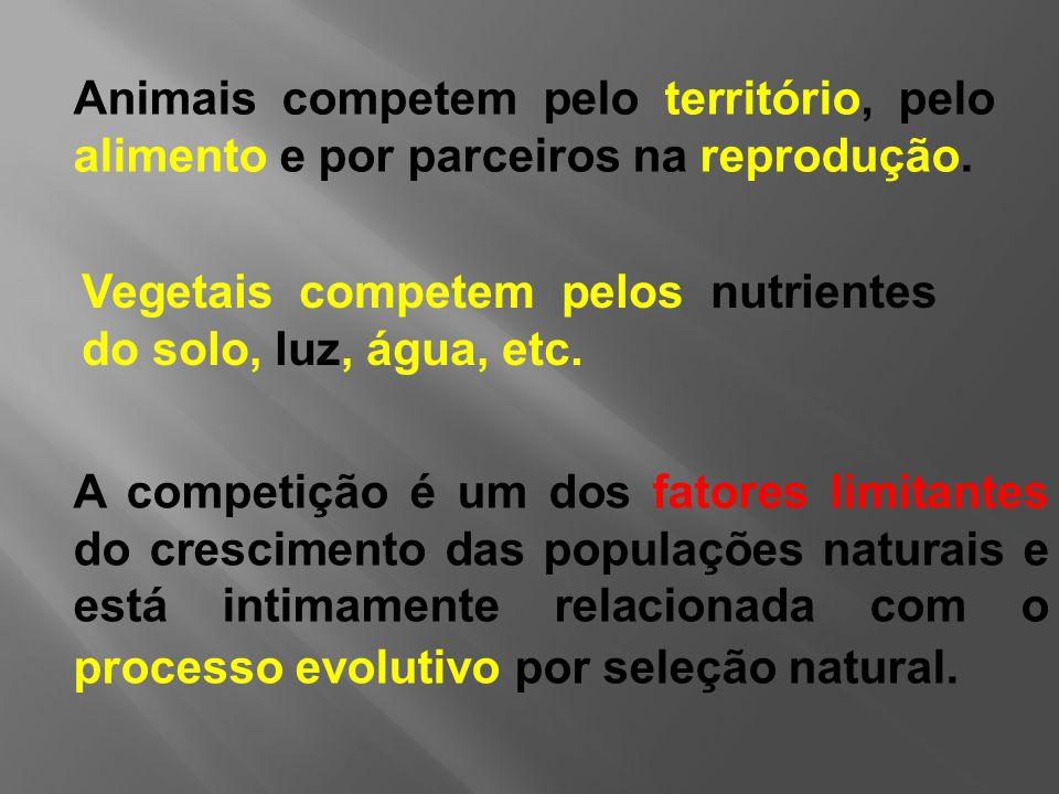Animais competem pelo território, pelo alimento e por parceiros na reprodução.