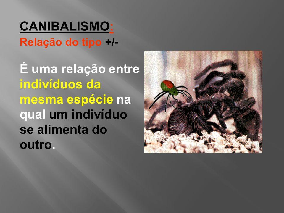 CANIBALISMO: Relação do tipo +/- É uma relação entre indivíduos da mesma espécie na qual um indivíduo se alimenta do outro.