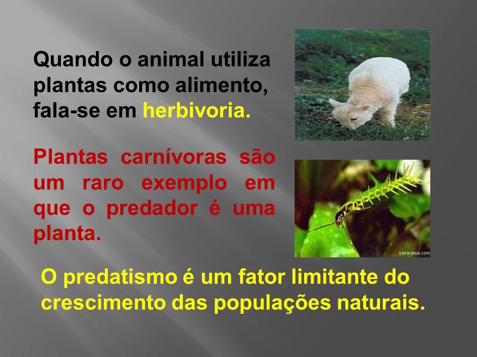 Quando o animal utiliza plantas como alimento, fala-se em herbivoria.