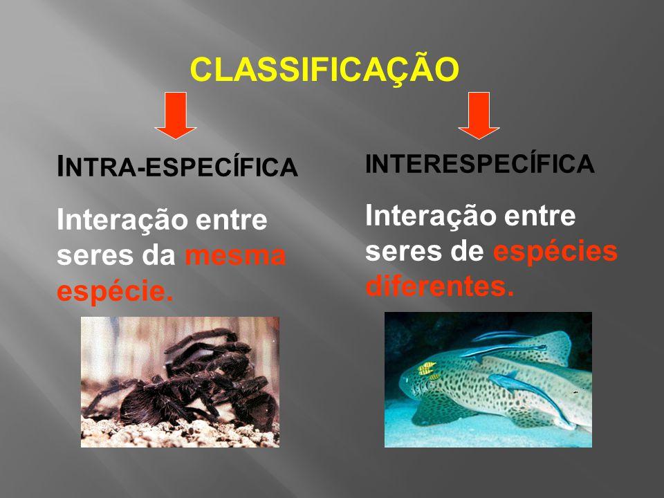CLASSIFICAÇÃO INTRA-ESPECÍFICA