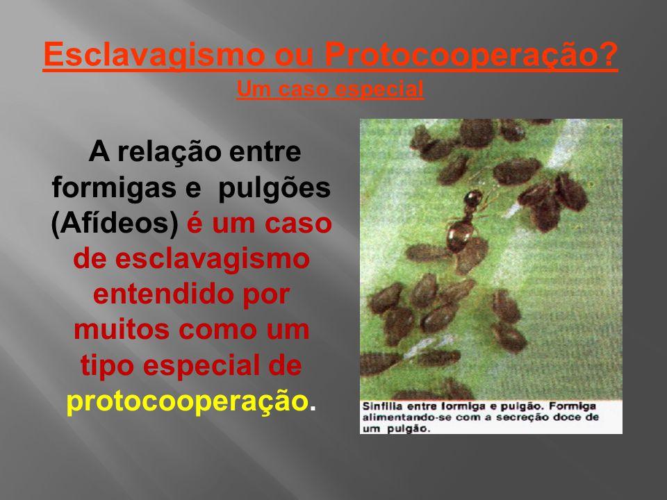 Esclavagismo ou Protocooperação