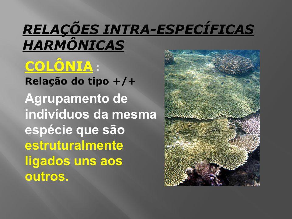RELAÇÕES INTRA-ESPECÍFICAS HARMÔNICAS