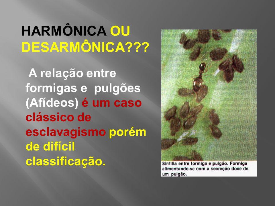 HARMÔNICA OU DESARMÔNICA