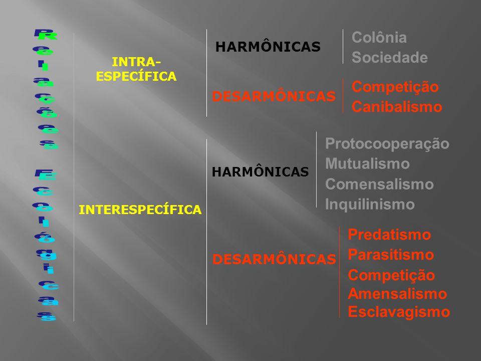 Colônia Sociedade Competição Canibalismo Protocooperação Mutualismo