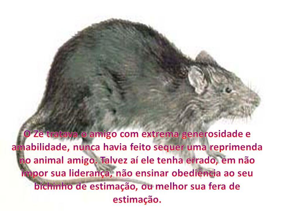 O Zé tratava o amigo com extrema generosidade e amabilidade, nunca havia feito sequer uma reprimenda no animal amigo.