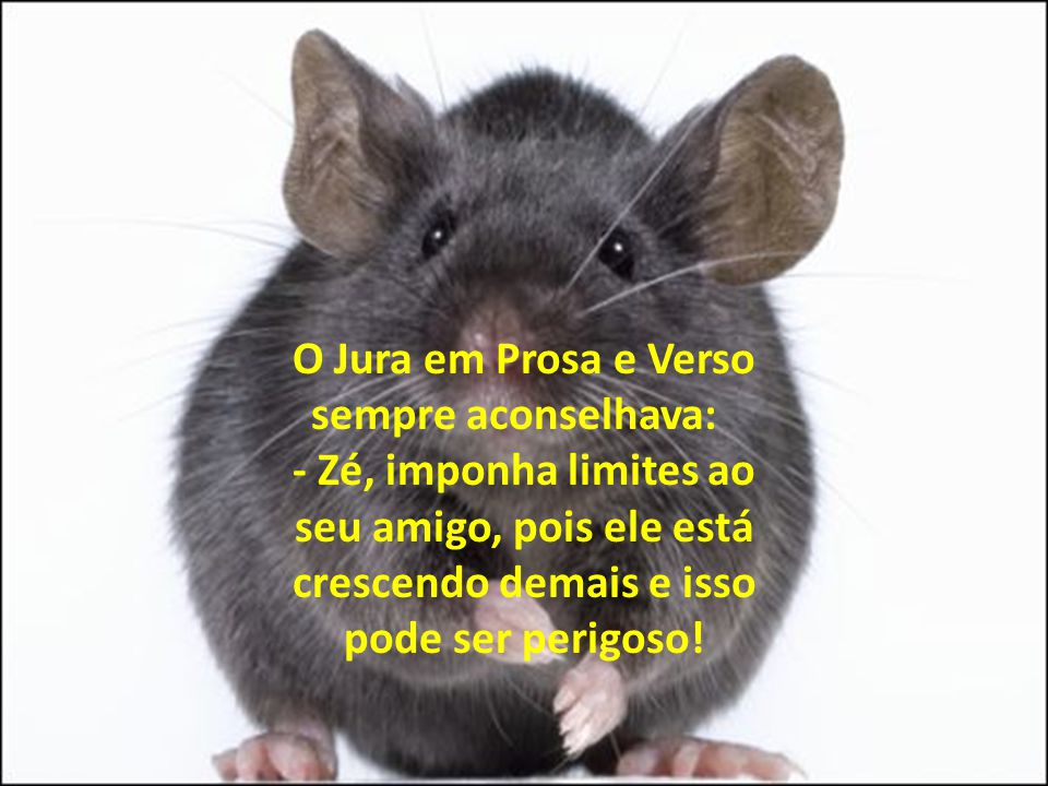 O Jura em Prosa e Verso sempre aconselhava: