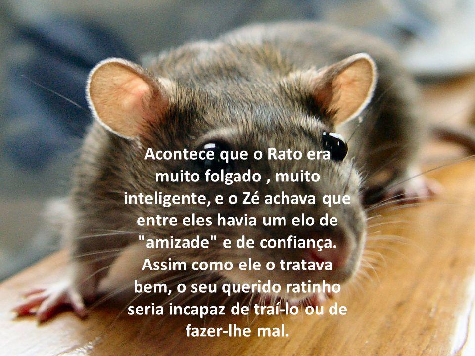 Acontece que o Rato era muito folgado , muito inteligente, e o Zé achava que entre eles havia um elo de amizade e de confiança.