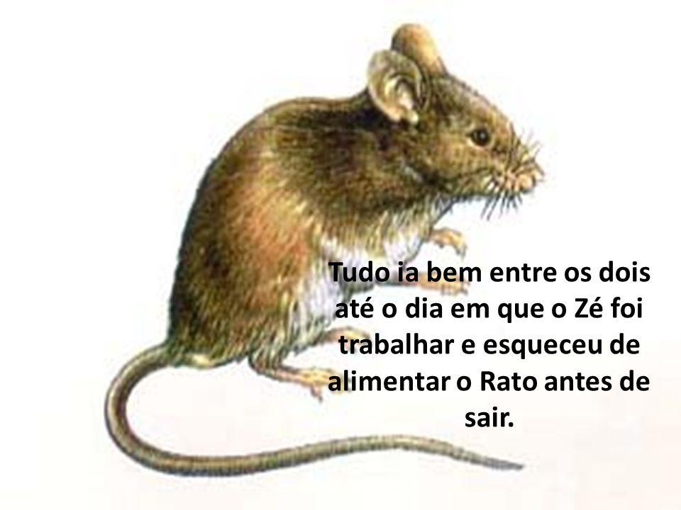 Tudo ia bem entre os dois até o dia em que o Zé foi trabalhar e esqueceu de alimentar o Rato antes de sair.