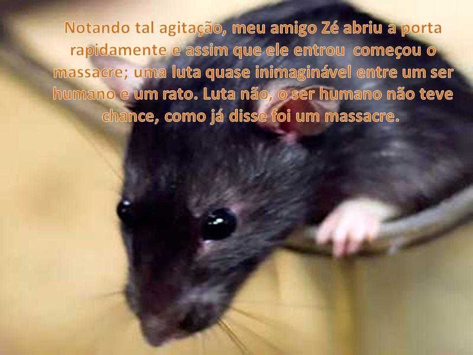 Notando tal agitação, meu amigo Zé abriu a porta rapidamente e assim que ele entrou começou o massacre; uma luta quase inimaginável entre um ser humano e um rato.