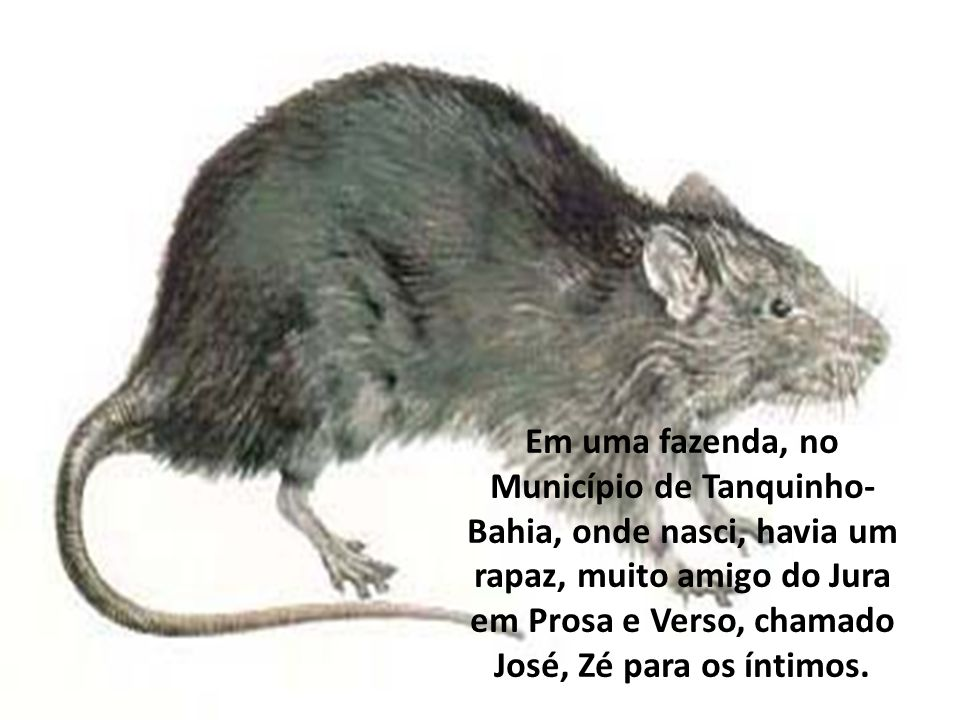Em uma fazenda, no Município de Tanquinho-Bahia, onde nasci, havia um rapaz, muito amigo do Jura em Prosa e Verso, chamado José, Zé para os íntimos.