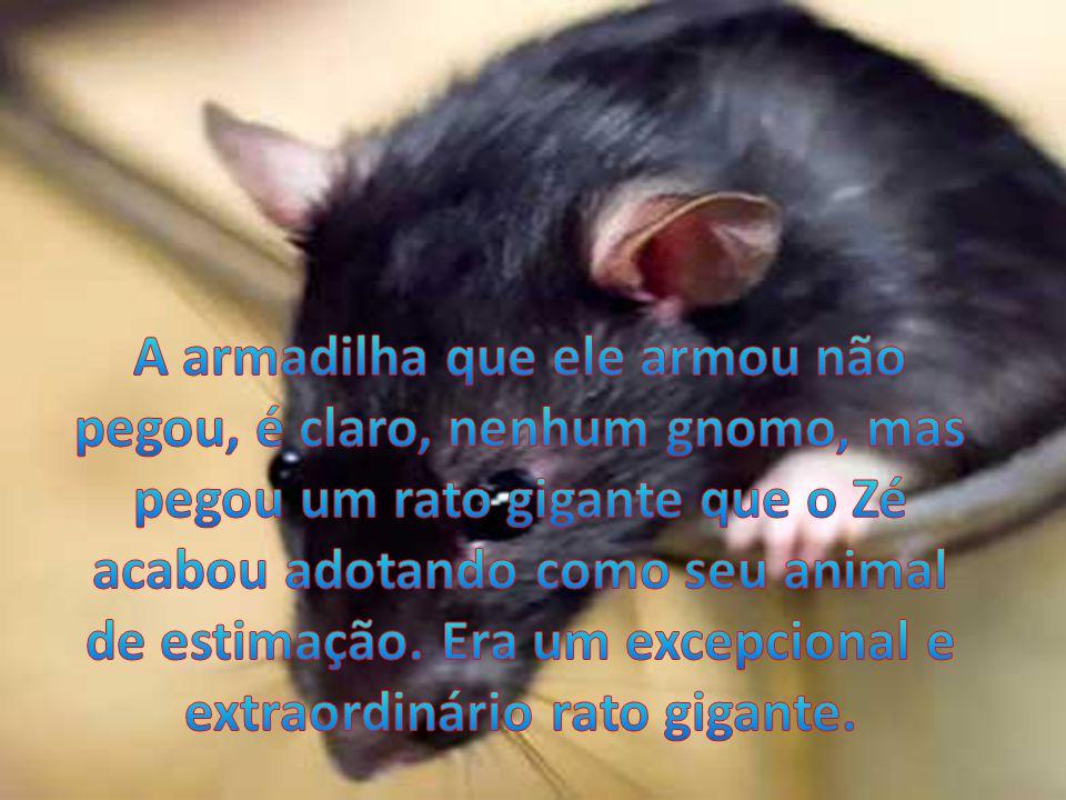 A armadilha que ele armou não pegou, é claro, nenhum gnomo, mas pegou um rato gigante que o Zé acabou adotando como seu animal de estimação.
