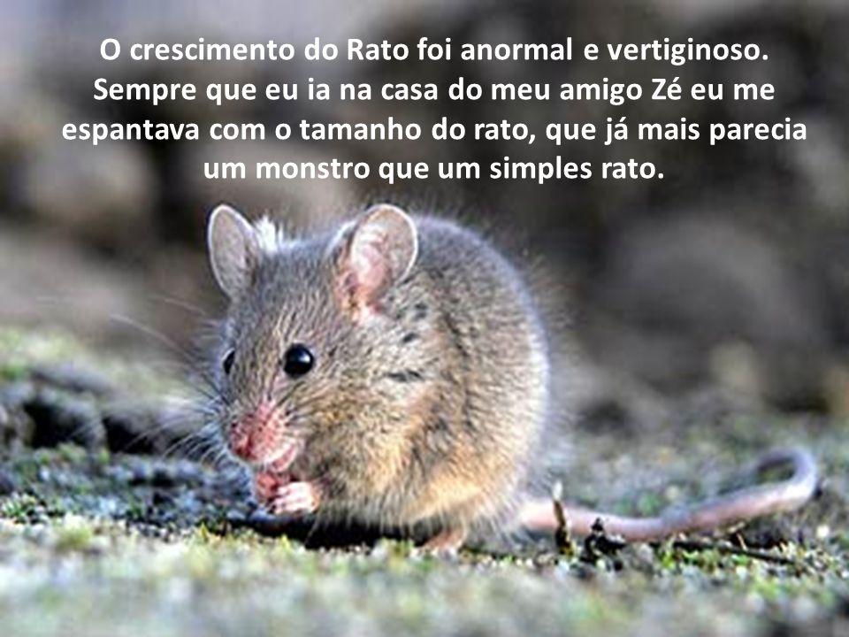 O crescimento do Rato foi anormal e vertiginoso