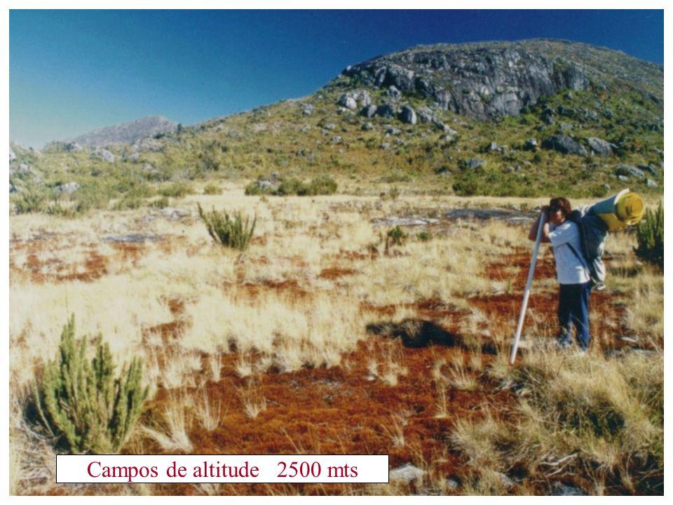 Campos de altitude 2500 mts