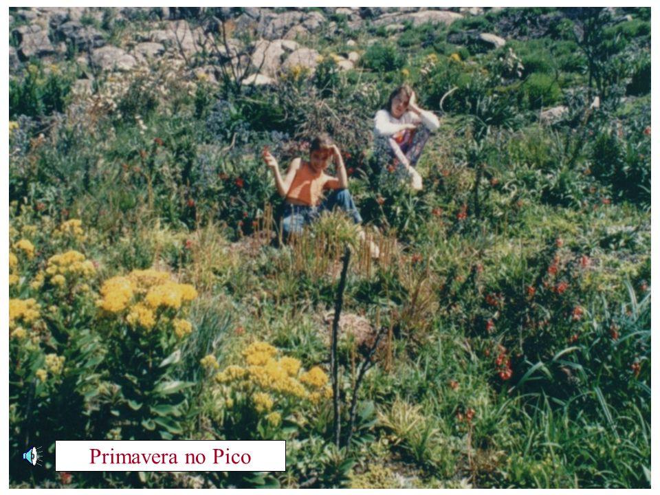 Primavera no Pico