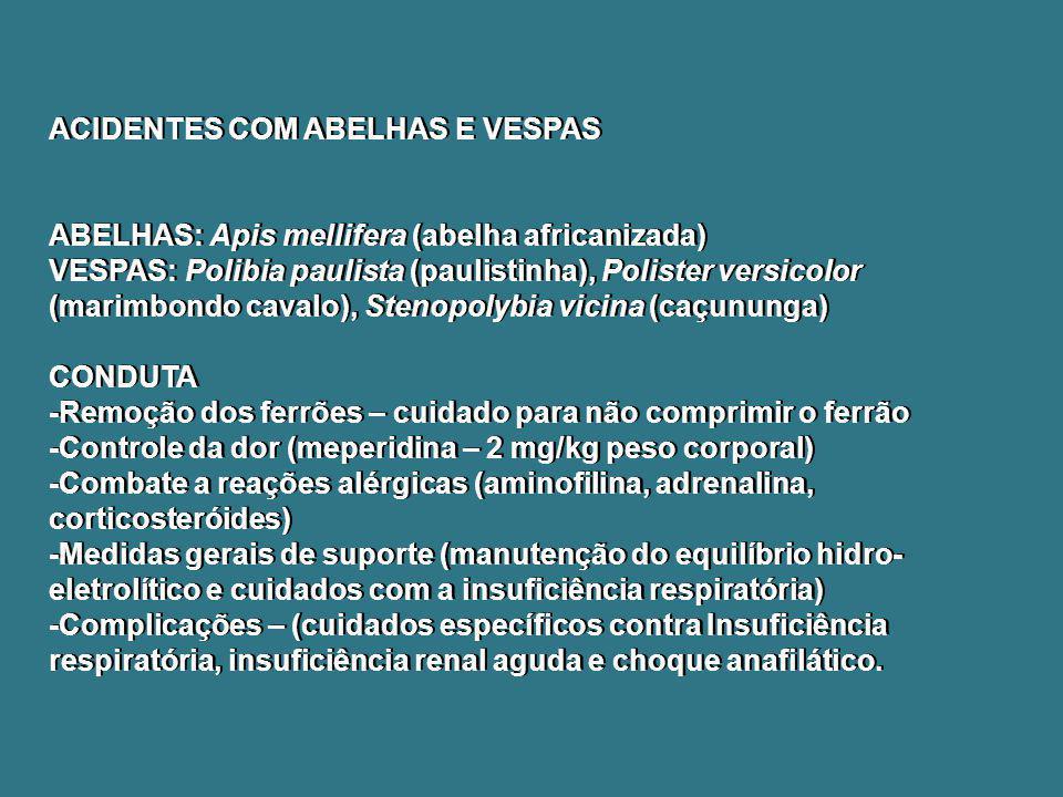 ACIDENTES COM ABELHAS E VESPAS