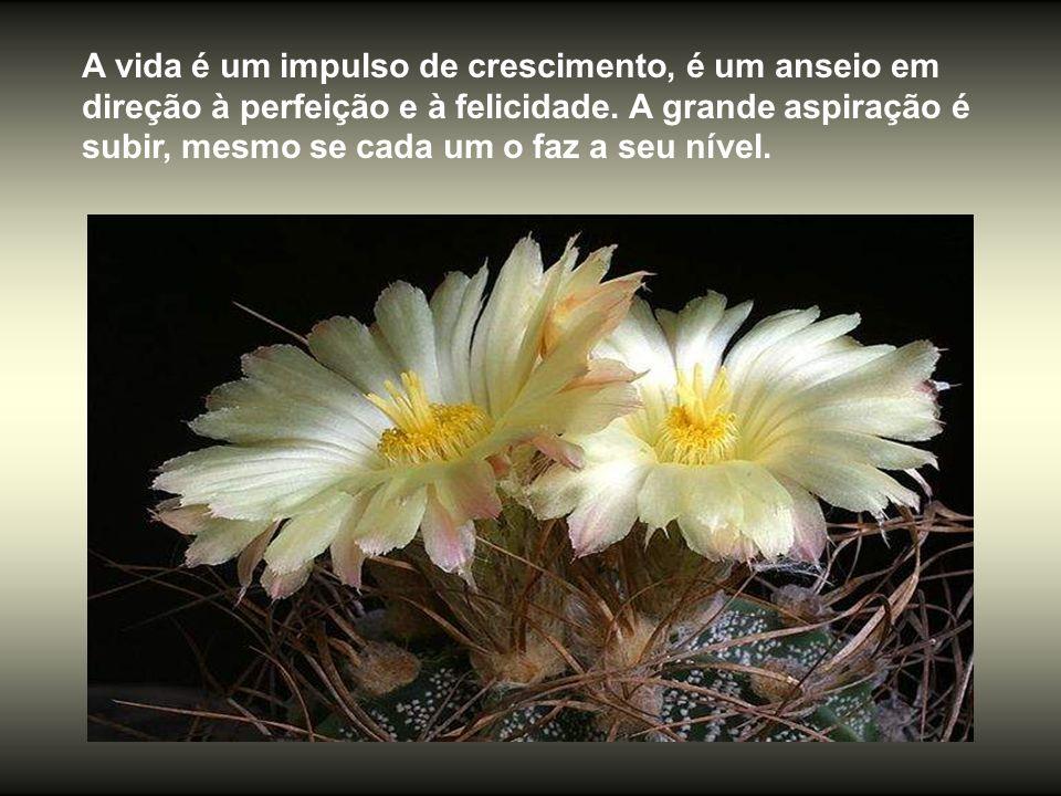 A vida é um impulso de crescimento, é um anseio em direção à perfeição e à felicidade.