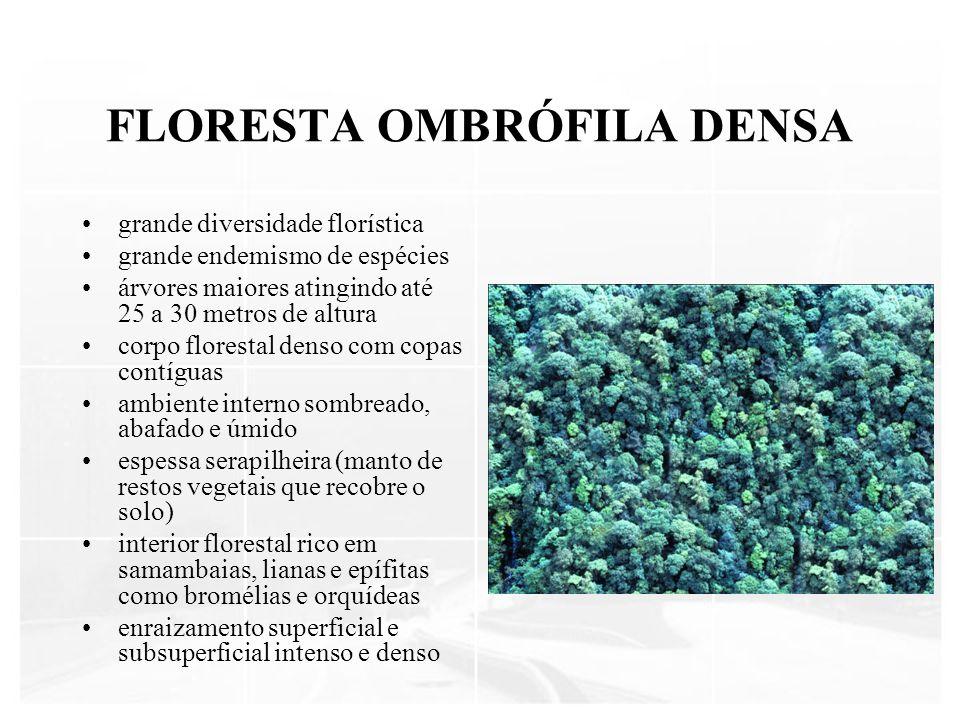 FLORESTA OMBRÓFILA DENSA