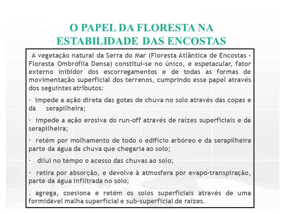 O PAPEL DA FLORESTA NA ESTABILIDADE DAS ENCOSTAS