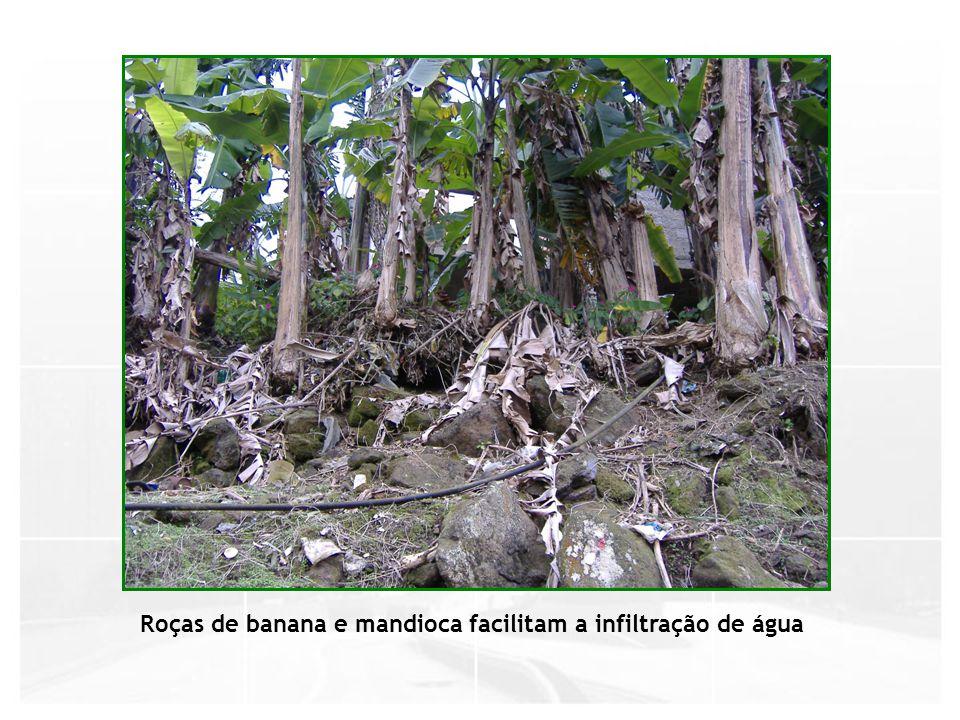 Roças de banana e mandioca facilitam a infiltração de água
