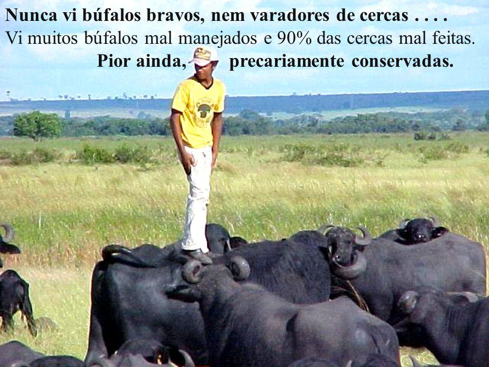 Nunca vi búfalos bravos, nem varadores de cercas