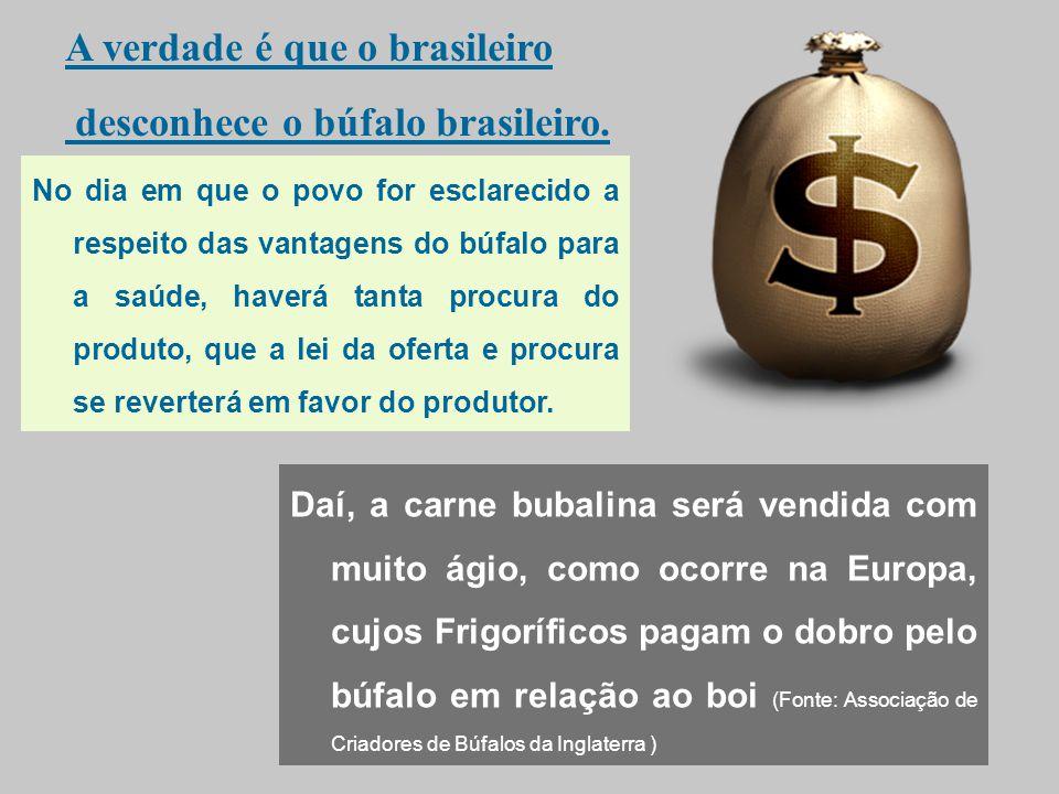 A verdade é que o brasileiro desconhece o búfalo brasileiro.