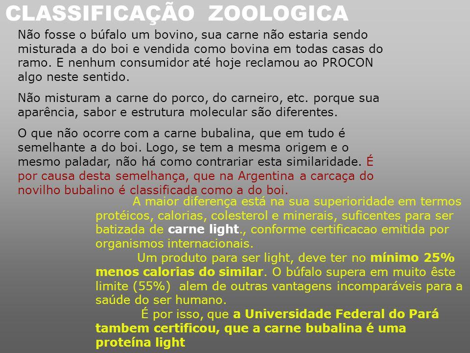 CLASSIFICAÇÃO ZOOLOGICA
